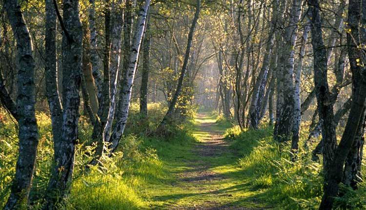 Sherwood-Forest2